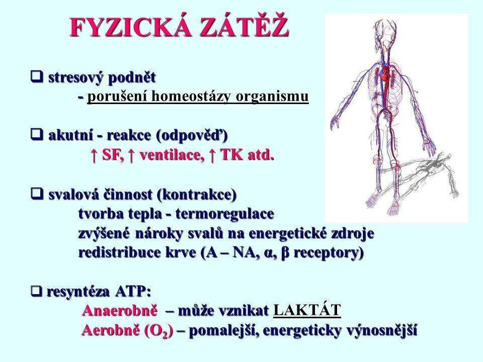 FYZICKÁ ZÁTĚŽ stresový podnět - porušení homeostázy organismu