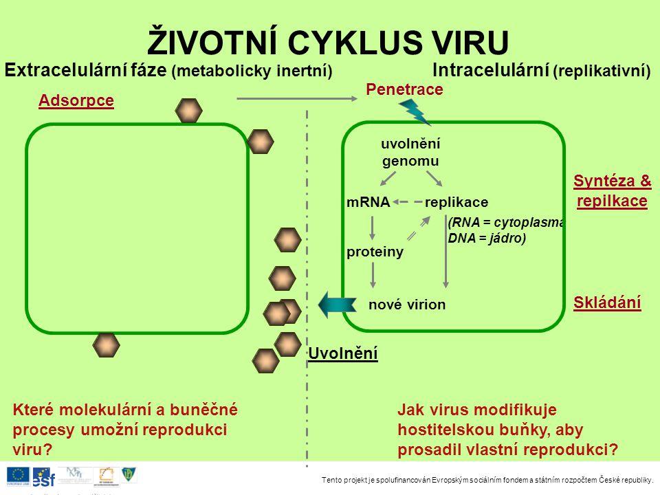 ŽIVOTNÍ CYKLUS VIRU Extracelulární fáze (metabolicky inertní)