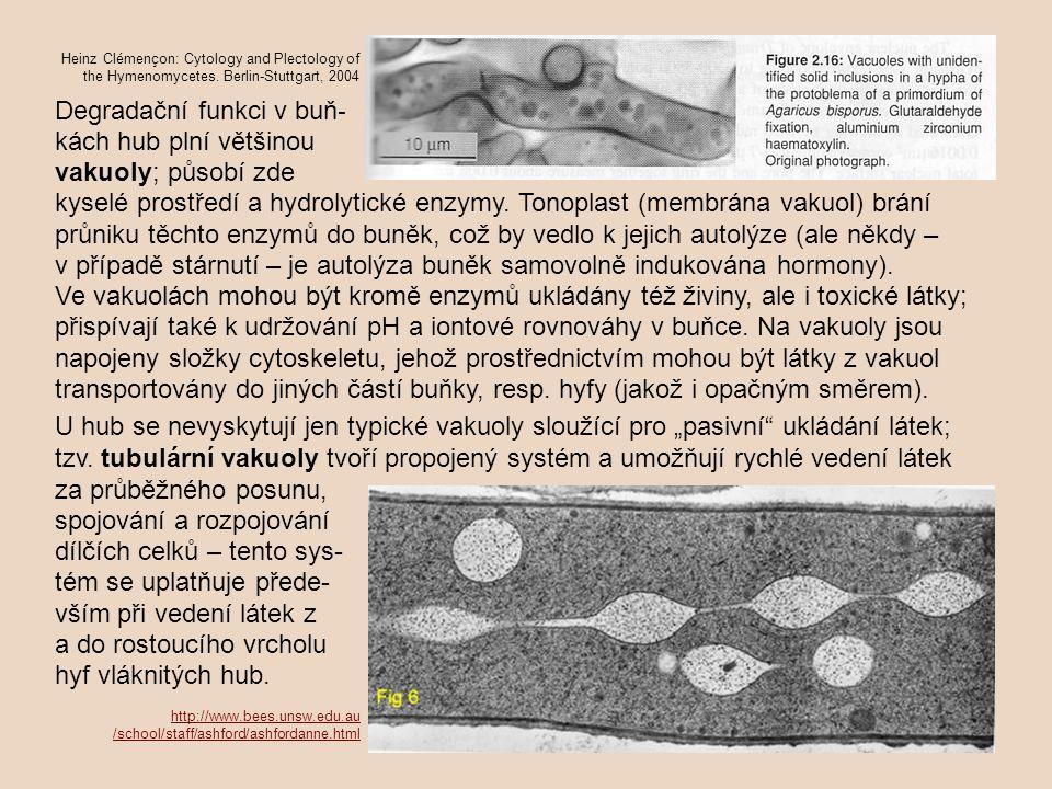 Degradační funkci v buň- kách hub plní většinou vakuoly; působí zde