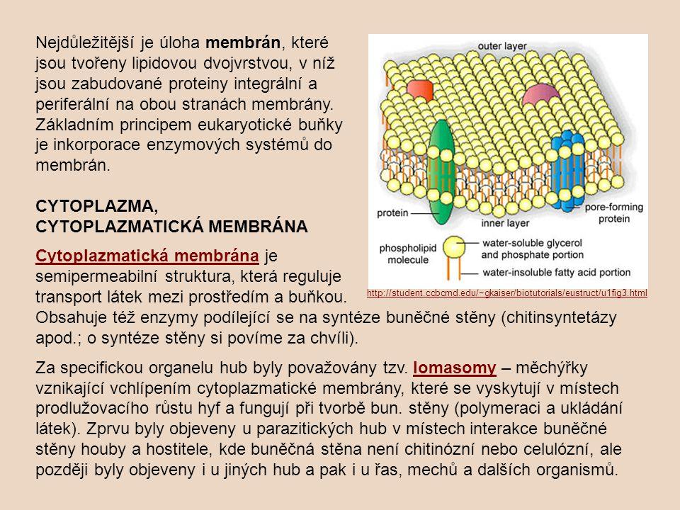 CYTOPLAZMA, CYTOPLAZMATICKÁ MEMBRÁNA