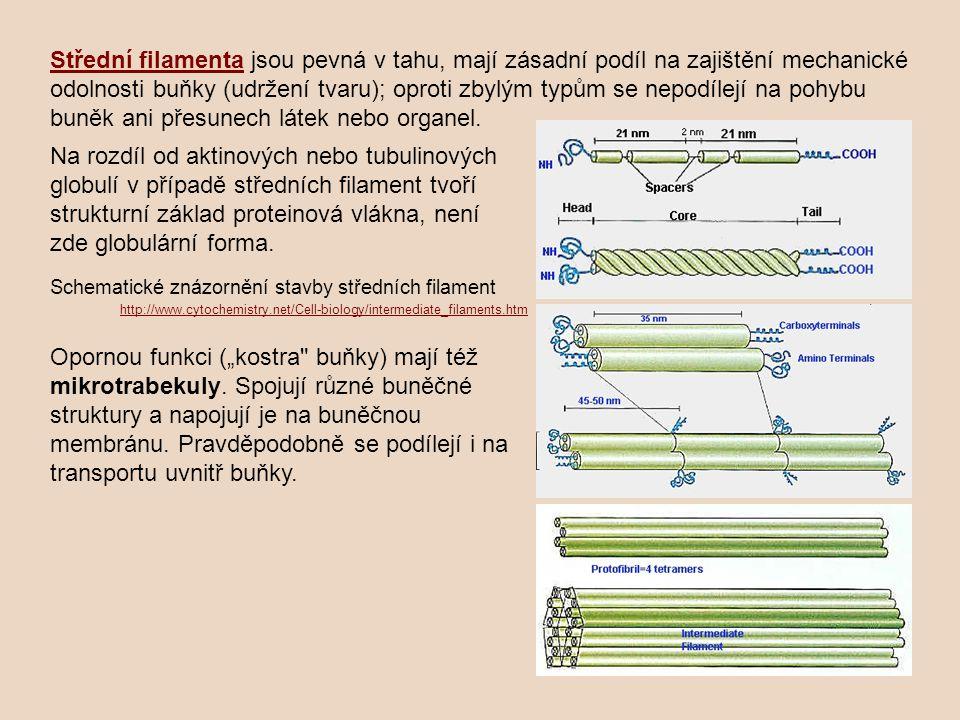 Střední filamenta jsou pevná v tahu, mají zásadní podíl na zajištění mechanické odolnosti buňky (udržení tvaru); oproti zbylým typům se nepodílejí na pohybu buněk ani přesunech látek nebo organel.