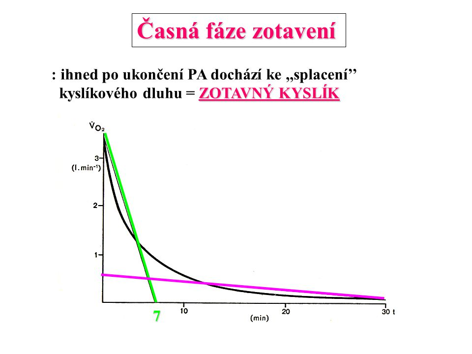 Časná fáze zotavení : ihned po ukončení PA dochází ke ,,splacení''