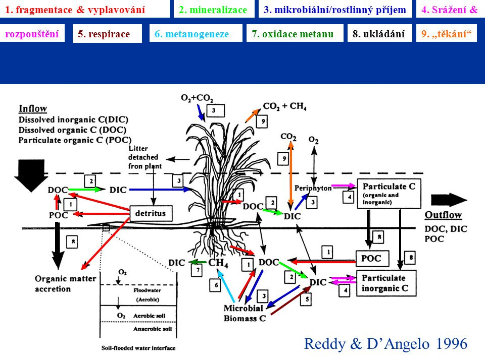 Reddy & D'Angelo 1996 1. fragmentace & vyplavování 2. mineralizace