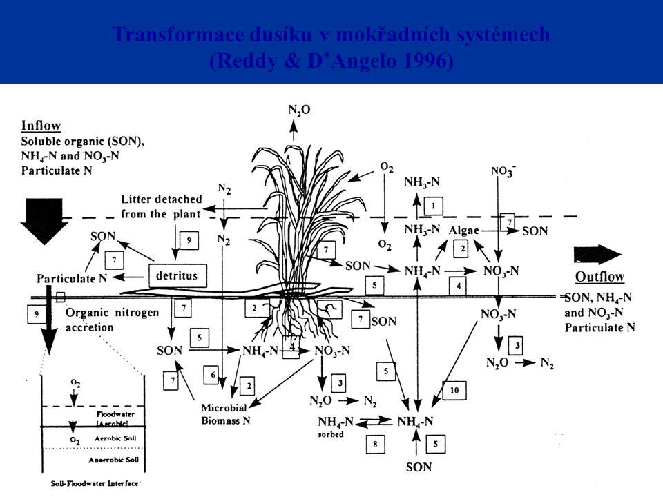 Transformace dusíku v mokřadních systémech (Reddy & D'Angelo 1996)
