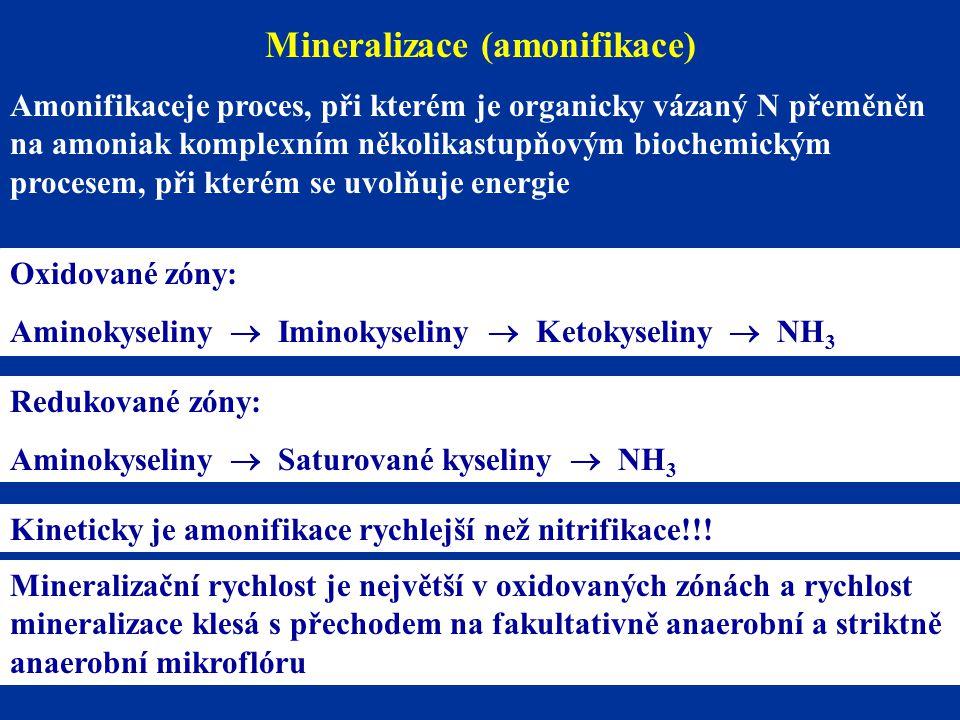 Mineralizace (amonifikace)