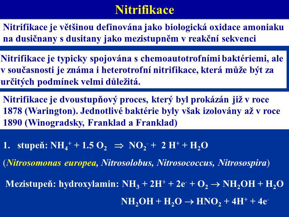 Mezistupeň: hydroxylamin: NH3 + 2H+ + 2e- + O2  NH2OH + H2O