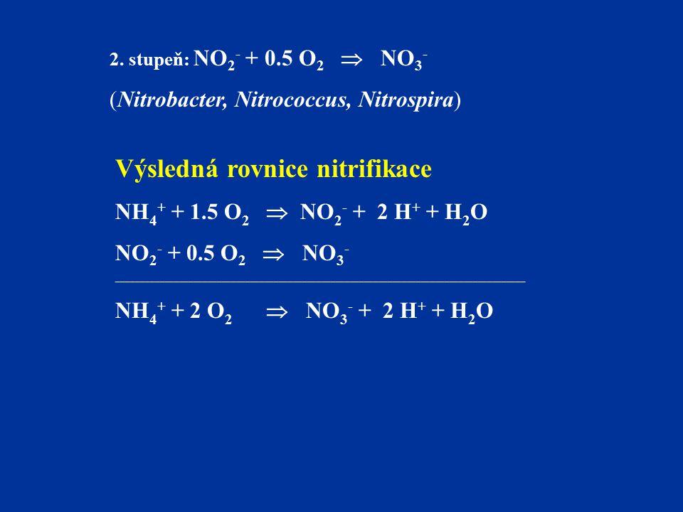 Výsledná rovnice nitrifikace