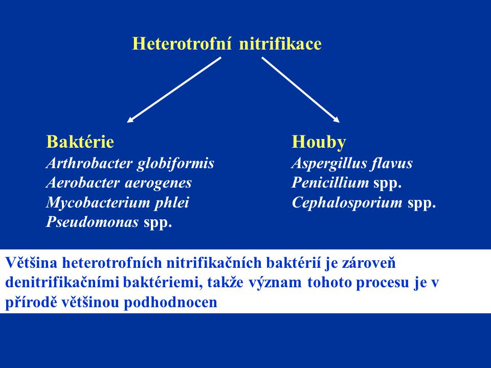 Heterotrofní nitrifikace