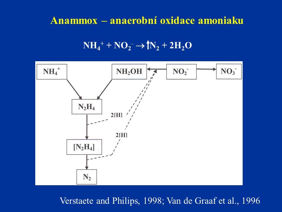 Anammox – anaerobní oxidace amoniaku