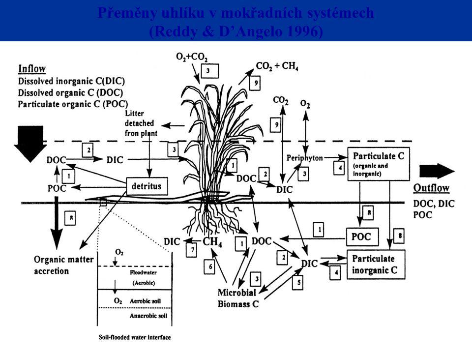 Přeměny uhlíku v mokřadních systémech (Reddy & D'Angelo 1996)