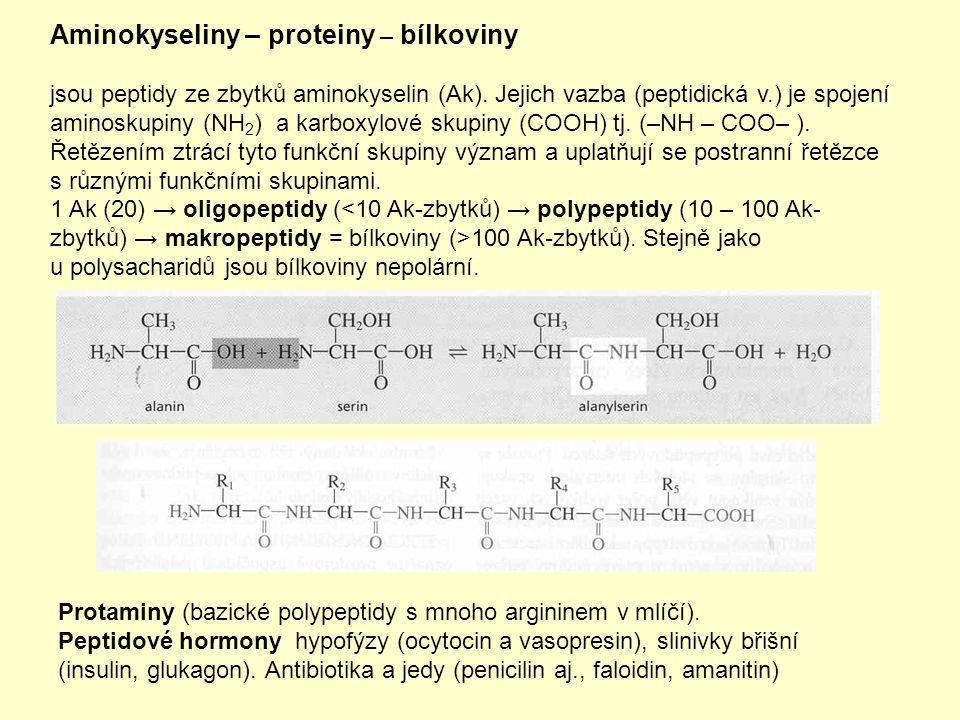 Aminokyseliny – proteiny – bílkoviny