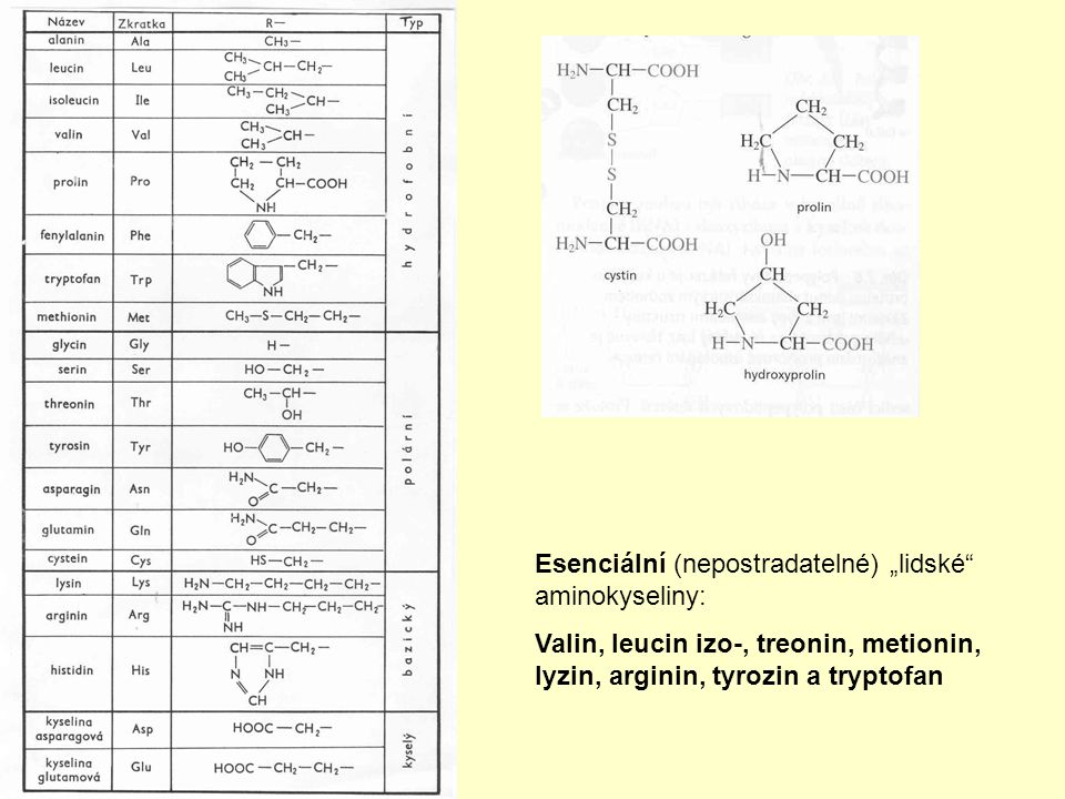"""Esenciální (nepostradatelné) """"lidské aminokyseliny:"""