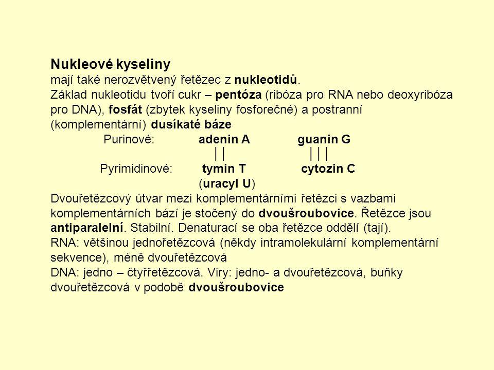 Nukleové kyseliny mají také nerozvětvený řetězec z nukleotidů.