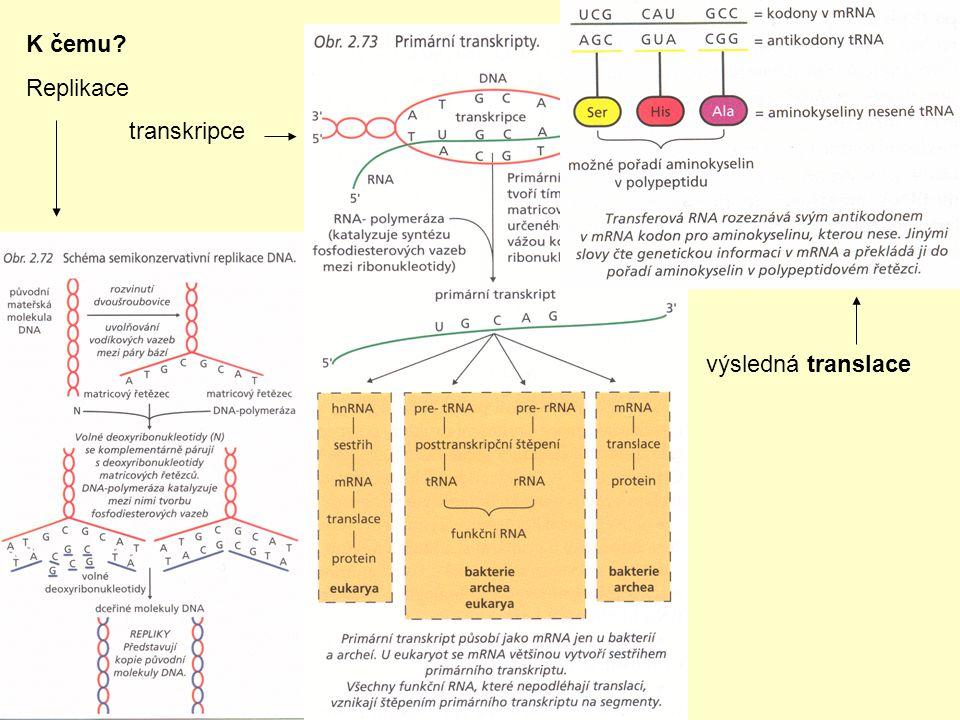K čemu Replikace transkripce výsledná translace