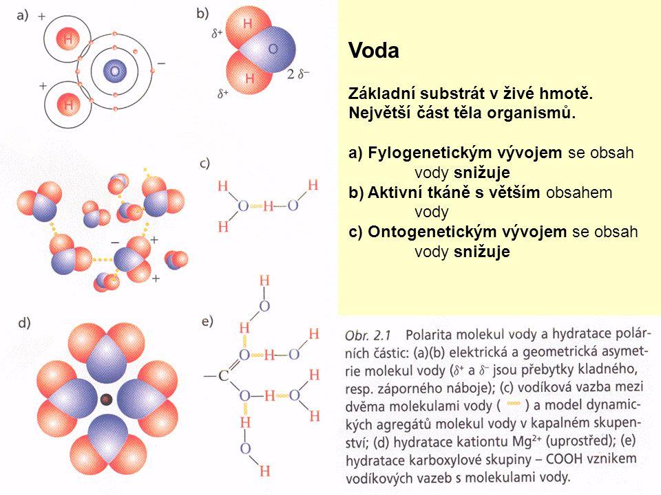 Voda Základní substrát v živé hmotě. Největší část těla organismů.