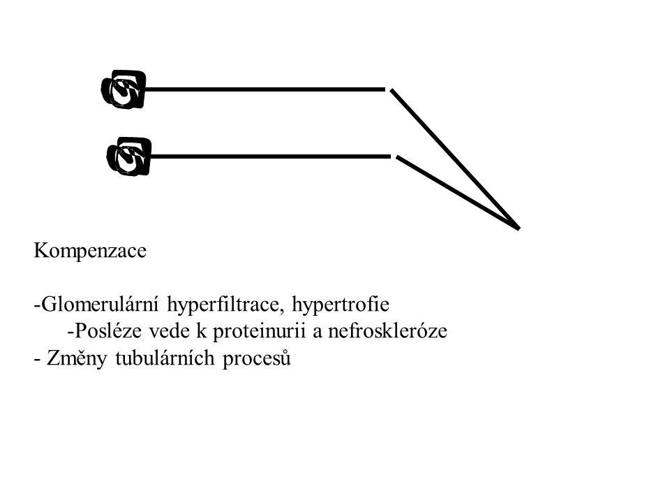 Kompenzace Glomerulární hyperfiltrace, hypertrofie.