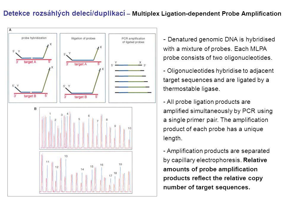 Detekce rozsáhlých delecí/duplikací – Multiplex Ligation-dependent Probe Amplification