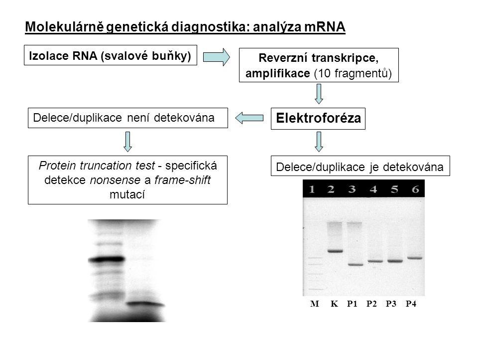 Reverzní transkripce, amplifikace (10 fragmentů)