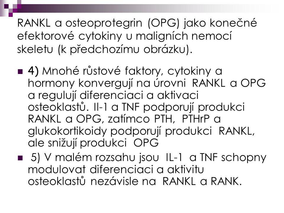 RANKL a osteoprotegrin (OPG) jako konečné efektorové cytokiny u maligních nemocí skeletu (k předchozímu obrázku).