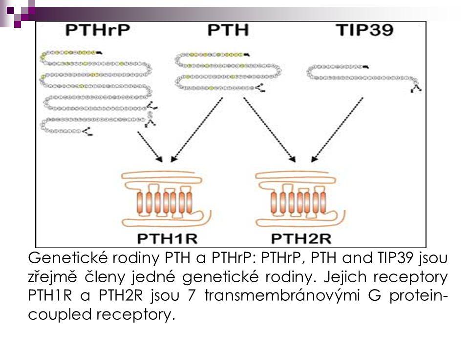Genetické rodiny PTH a PTHrP: PTHrP, PTH and TIP39 jsou zřejmě členy jedné genetické rodiny.