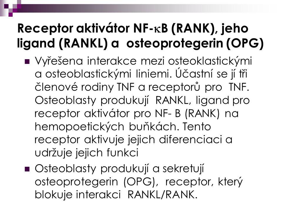 Receptor aktivátor NF-B (RANK), jeho ligand (RANKL) a osteoprotegerin (OPG)