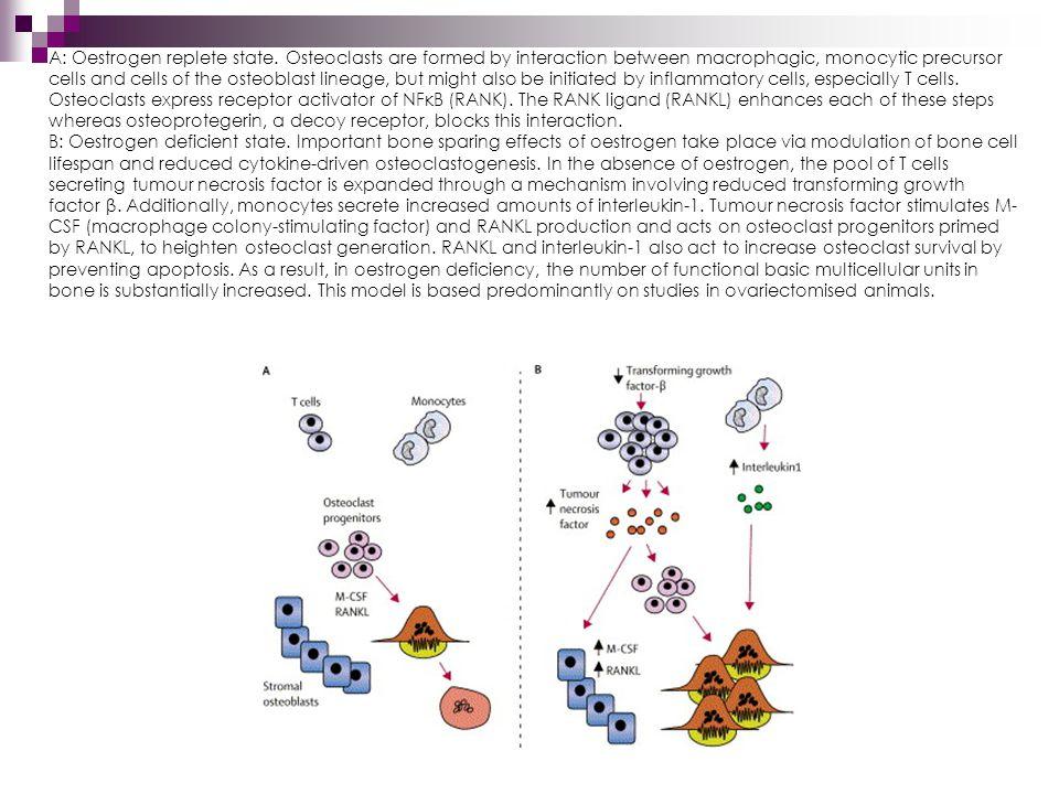 A: Oestrogen replete state