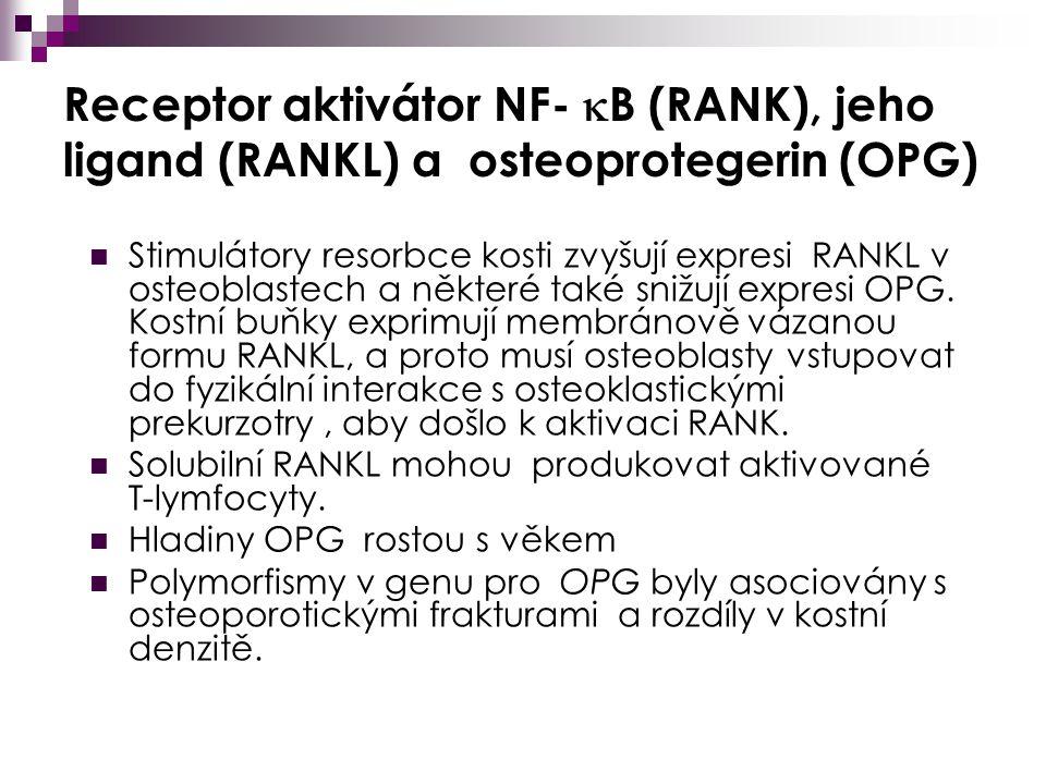 Receptor aktivátor NF- B (RANK), jeho ligand (RANKL) a osteoprotegerin (OPG)