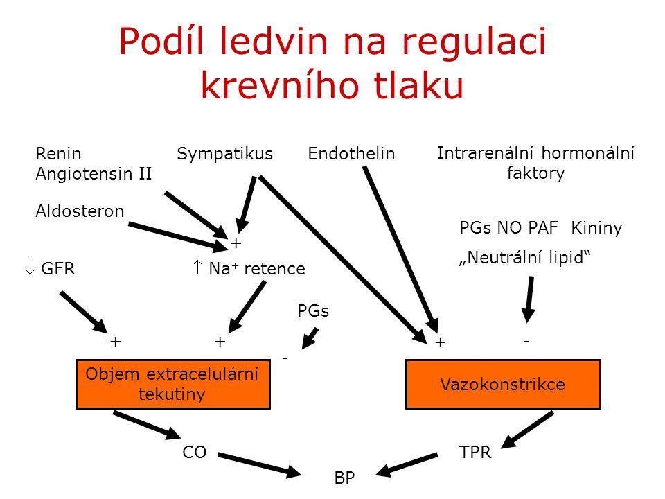 Podíl ledvin na regulaci krevního tlaku