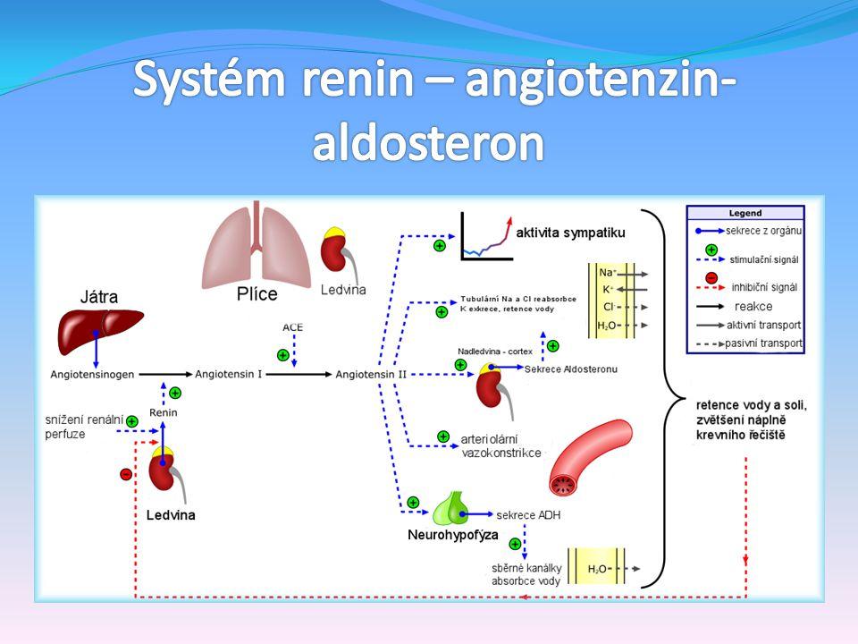 Systém renin – angiotenzin-aldosteron