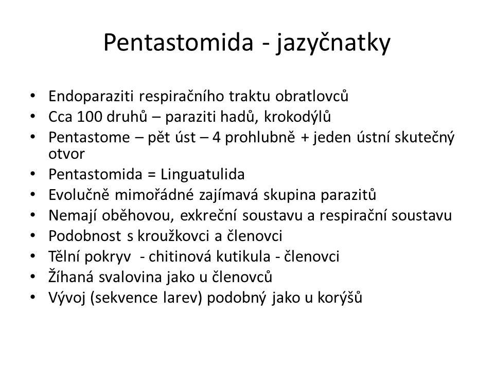 Pentastomida - jazyčnatky