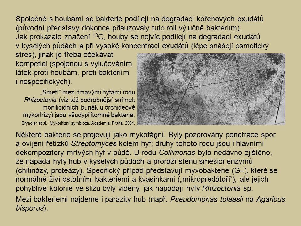 kompetici (spojenou s vylučováním látek proti houbám, proti bakteriím