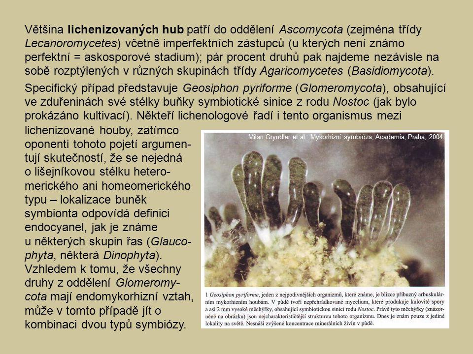 Většina lichenizovaných hub patří do oddělení Ascomycota (zejména třídy Lecanoromycetes) včetně imperfektních zástupců (u kterých není známo perfektní = askosporové stadium); pár procent druhů pak najdeme nezávisle na sobě rozptýlených v různých skupinách třídy Agaricomycetes (Basidiomycota).