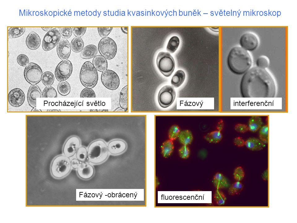 Mikroskopické metody studia kvasinkových buněk – světelný mikroskop