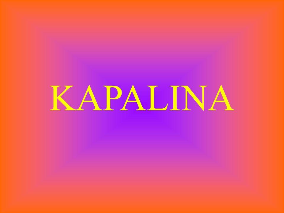 KAPALINA