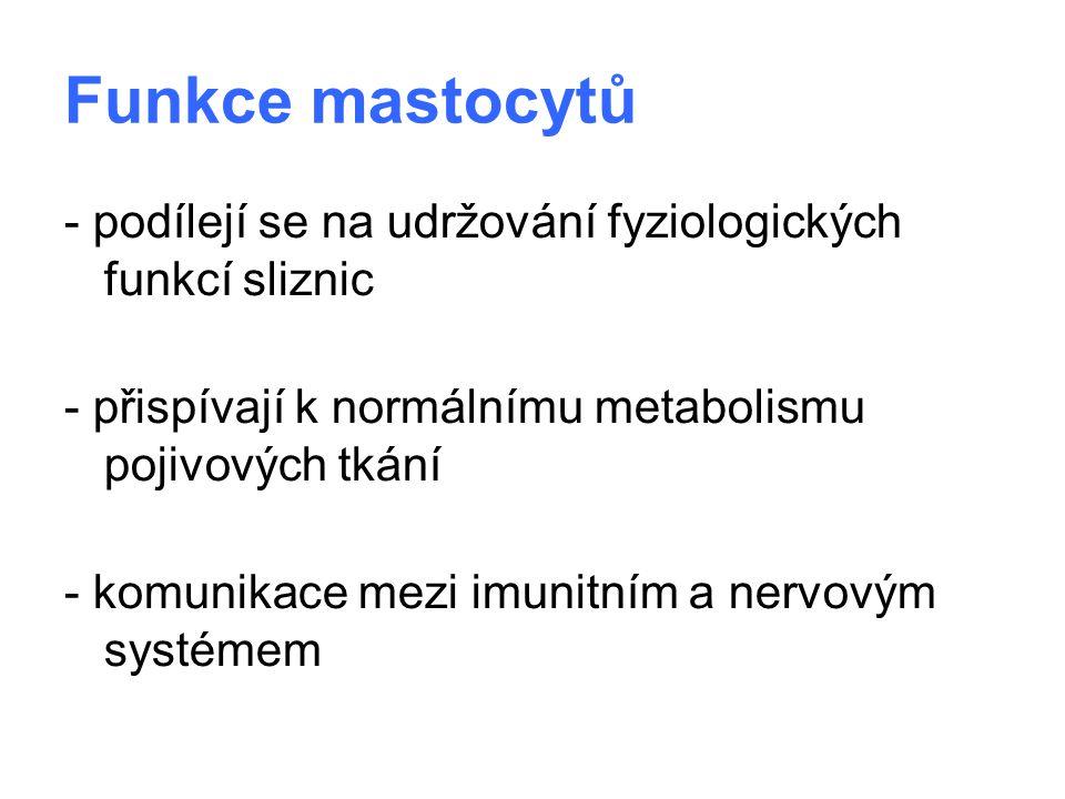Funkce mastocytů - podílejí se na udržování fyziologických funkcí sliznic. - přispívají k normálnímu metabolismu pojivových tkání.