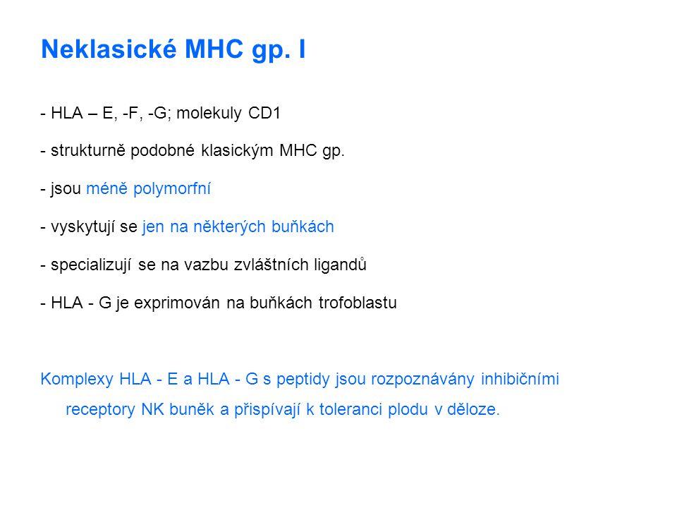 Neklasické MHC gp. I - HLA – E, -F, -G; molekuly CD1