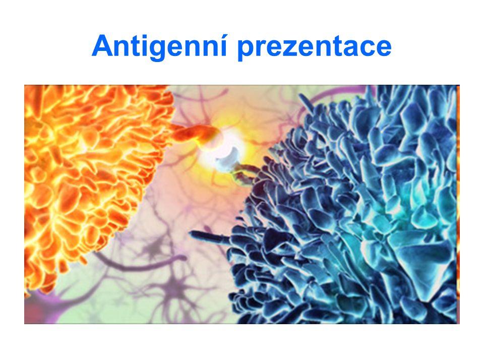 Antigenní prezentace