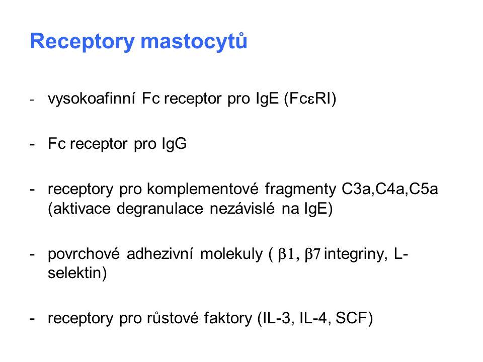 Receptory mastocytů - Fc receptor pro IgG