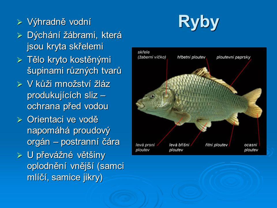 Ryby Výhradně vodní Dýchání žábrami, která jsou kryta skřelemi
