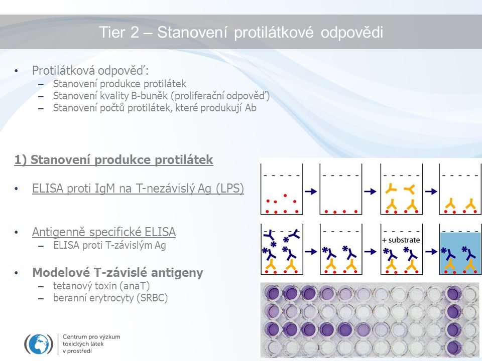 Tier 2 – Stanovení protilátkové odpovědi