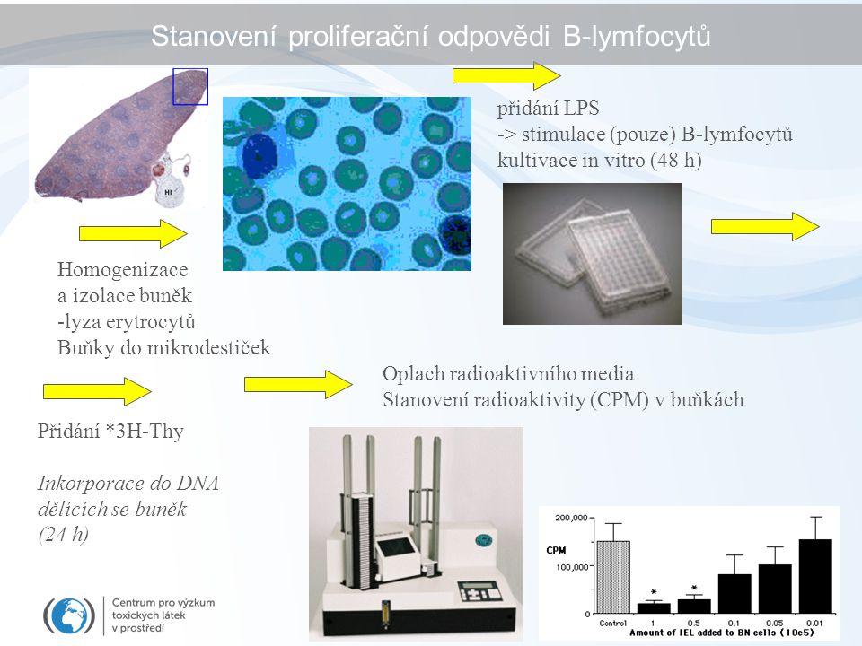 Stanovení proliferační odpovědi B-lymfocytů