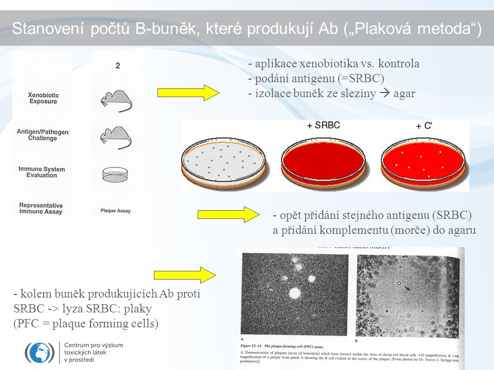 """Stanovení počtů B-buněk, které produkují Ab (""""Plaková metoda )"""