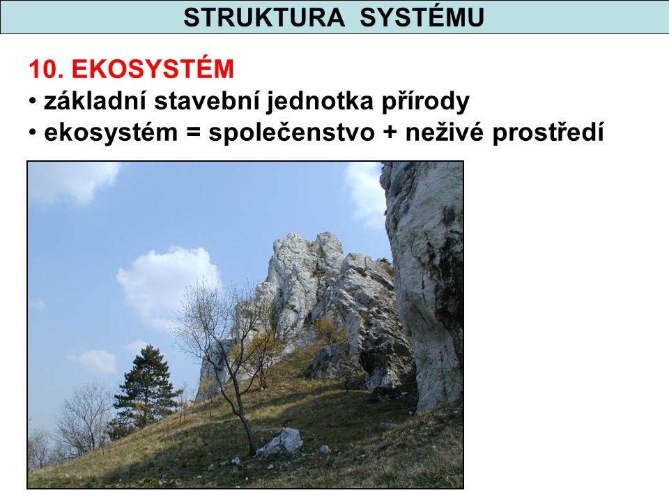 STRUKTURA SYSTÉMU 10. EKOSYSTÉM. základní stavební jednotka přírody.