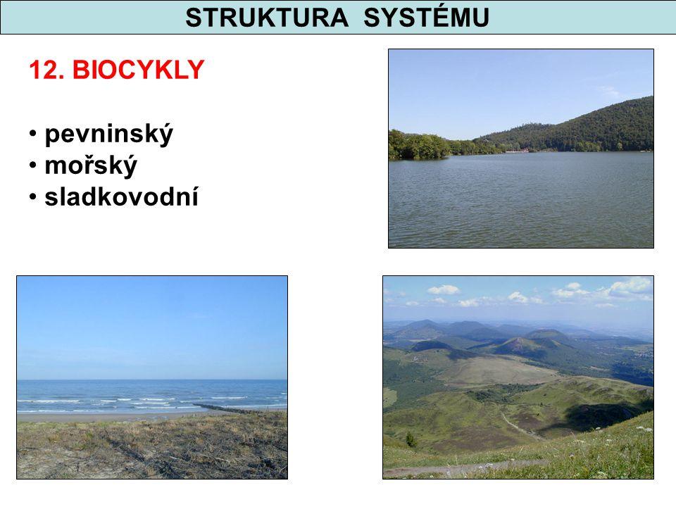 STRUKTURA SYSTÉMU 12. BIOCYKLY pevninský mořský sladkovodní