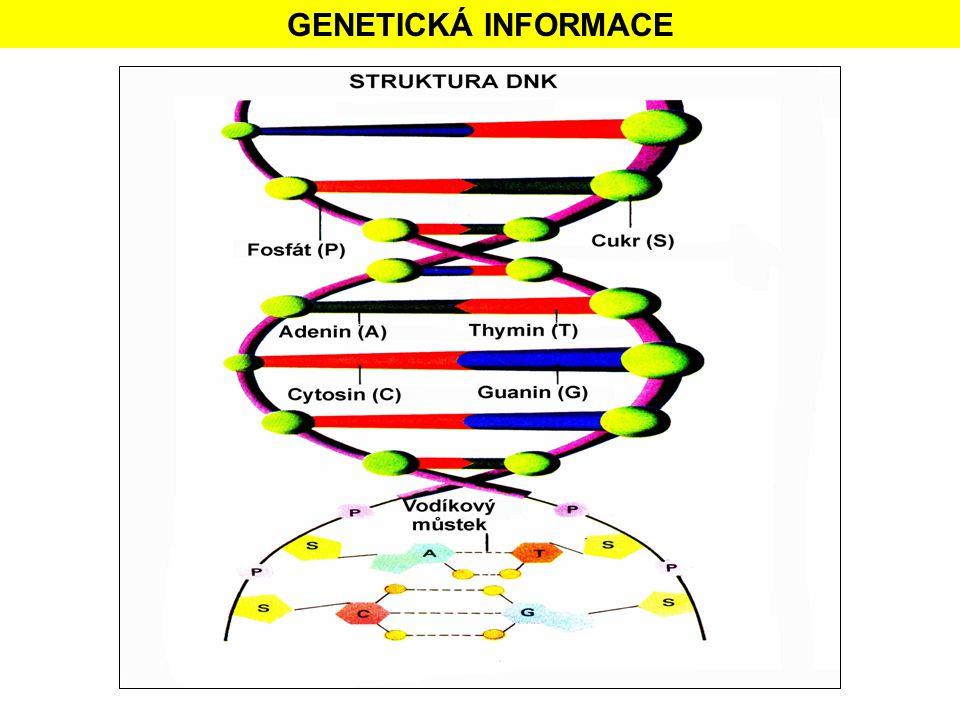 GENETICKÁ INFORMACE