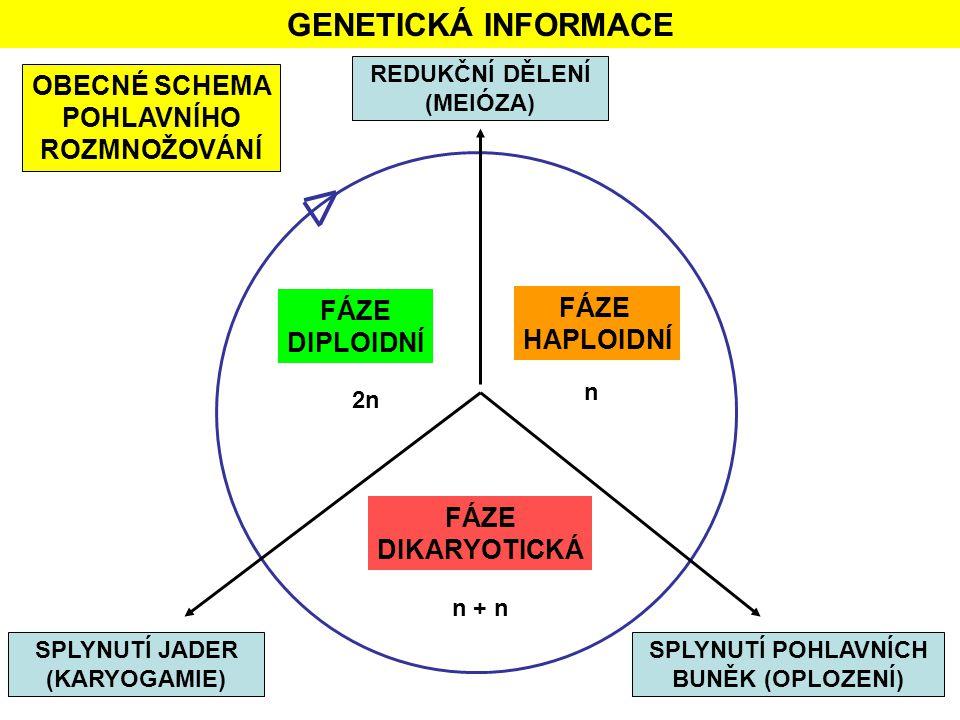 GENETICKÁ INFORMACE OBECNÉ SCHEMA POHLAVNÍHO ROZMNOŽOVÁNÍ FÁZE FÁZE