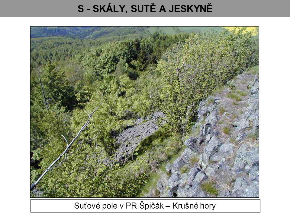Suťové pole v PR Špičák – Krušné hory