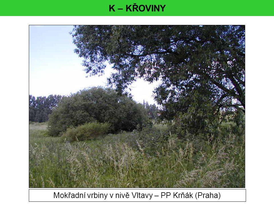 Mokřadní vrbiny v nivě Vltavy – PP Krňák (Praha)