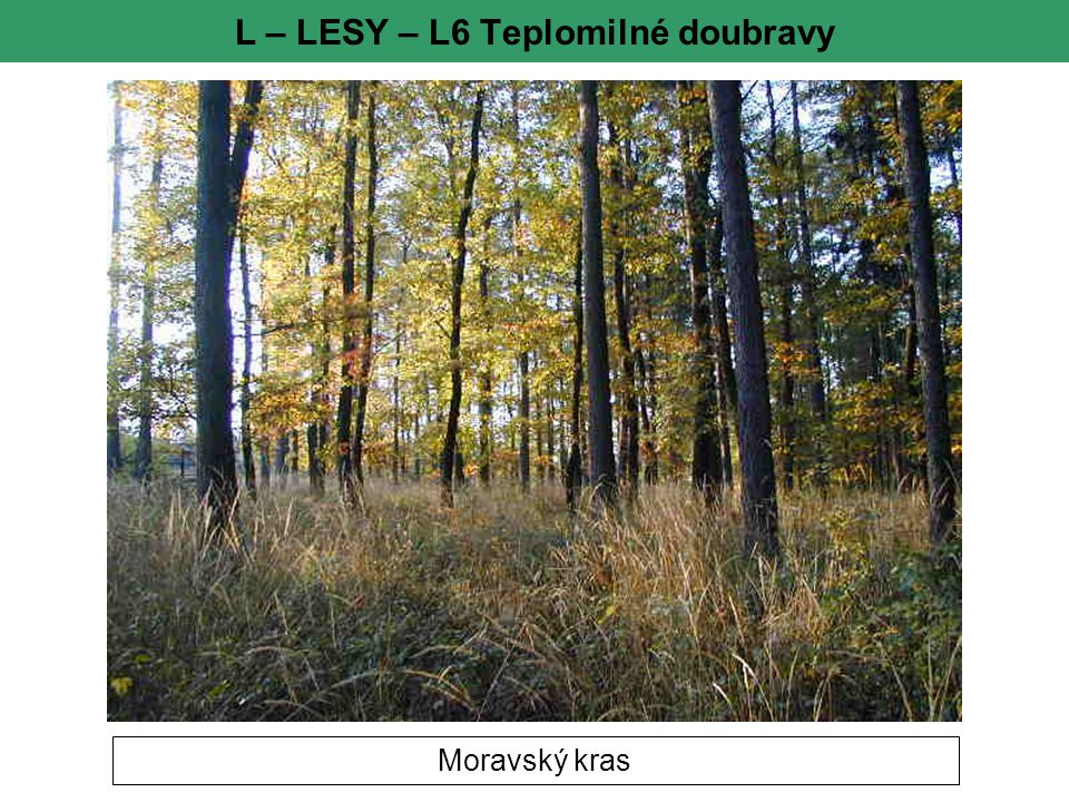 L – LESY – L6 Teplomilné doubravy
