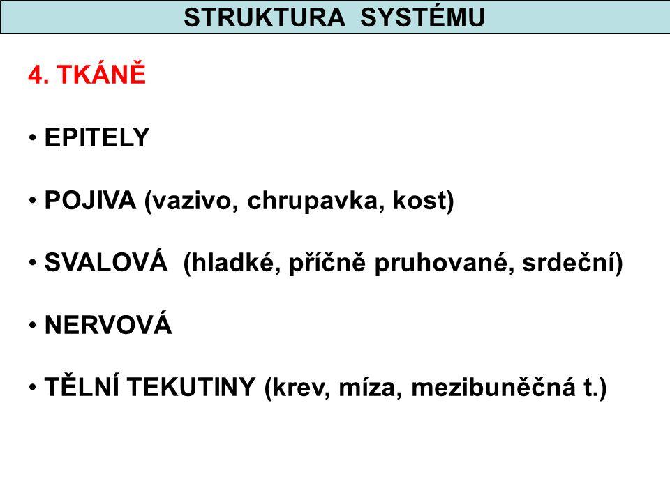 STRUKTURA SYSTÉMU 4. TKÁNĚ. EPITELY. POJIVA (vazivo, chrupavka, kost) SVALOVÁ (hladké, příčně pruhované, srdeční)